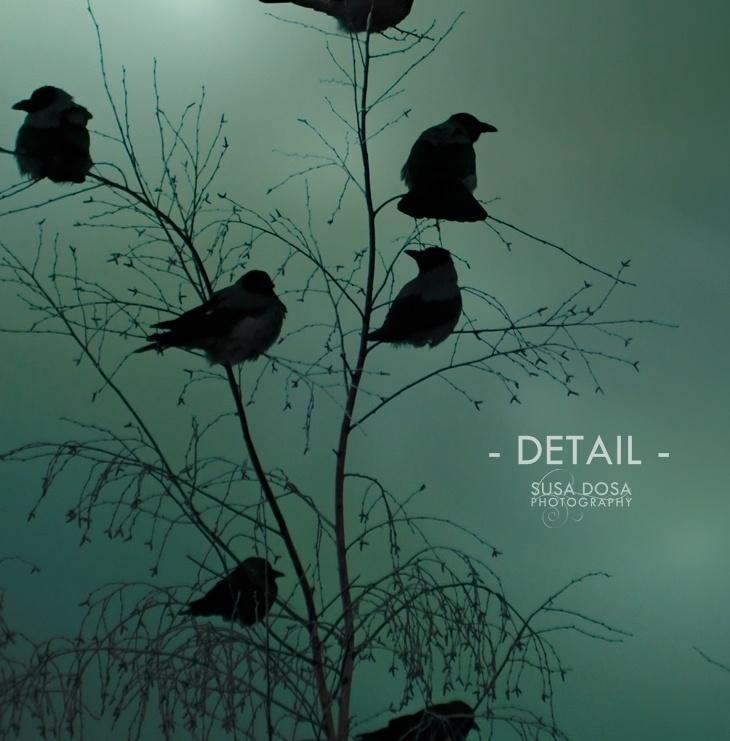 - Birds -