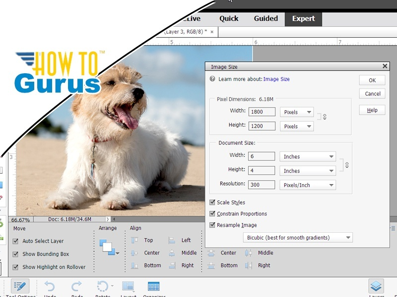 Photoshop Elements Image Size : How to Resize an Image in 15 14 13 12 11 Tutorial
