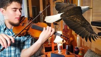 Solitary Bird for Violin Solo