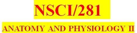 NSCI 281 Week 7 Anatomy & Physiology Revealed Worksheets