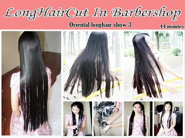 Oriental longhair show 3