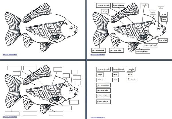 set per attività con l'incastro del pesce