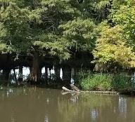 Lake (mobile)