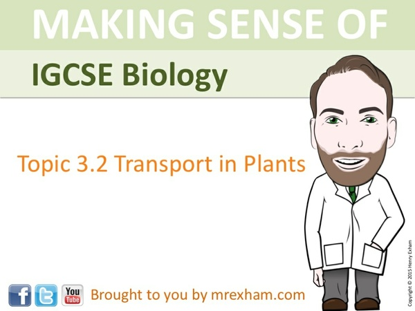 IGCSE Biology - Plant Transport Presentation