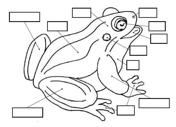 set attività per l'incastro della rana Lapappadolce
