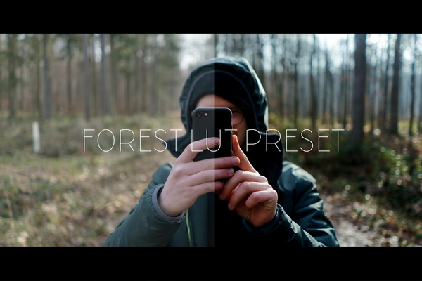 FOREST LUT | for filmmakers
