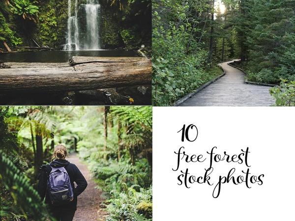 UnlikeStock.com - Free 10 Forest Stock Photos