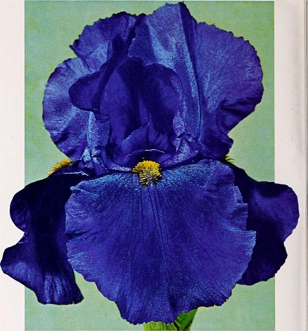 Audiolibro: Cuentos y fábulas del Marqués de Sade : La flor del castaño