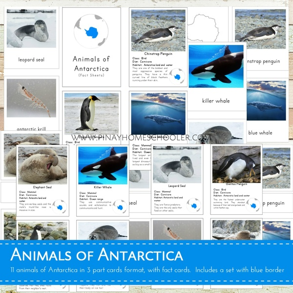 Animals of Antarctica