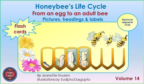 FLASH CARDS(PDF) HONEYBEE'S LIFE CYCLE FLASH CARDS VOLUME 14 - PICTURES, HEADINGS, LABELS, DIAGRAMS