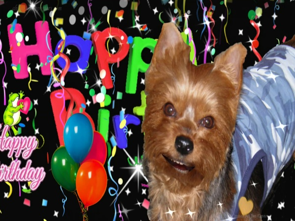Rooster the Dog Sings Hbday Wishes