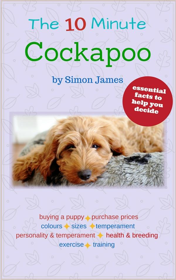 The 10 Minute Cockapoo
