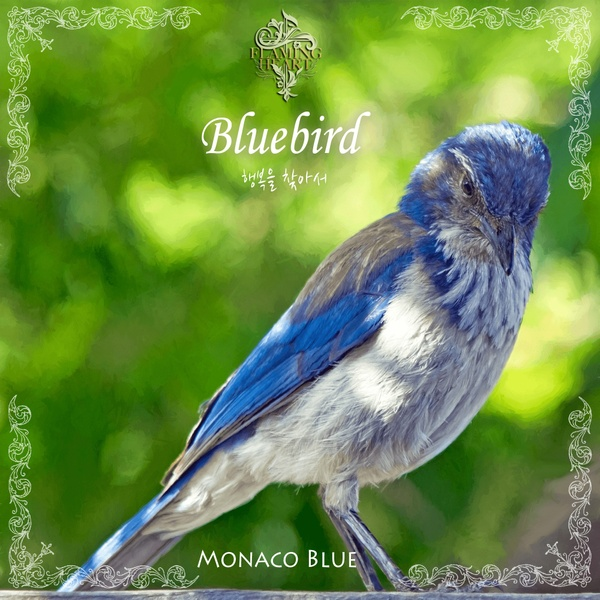 "[Fusion Piano] Bluebird / 파랑새 ""행복을 찾아서.."" Ver. Monaco Blue x Yang Su Hyeok (불꽃심장)"