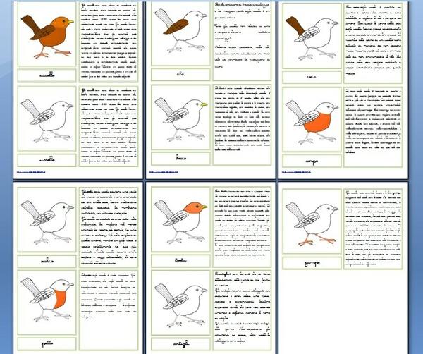 nomenclature 6-9 anni PARTI DELL'UCCELLO corsivo