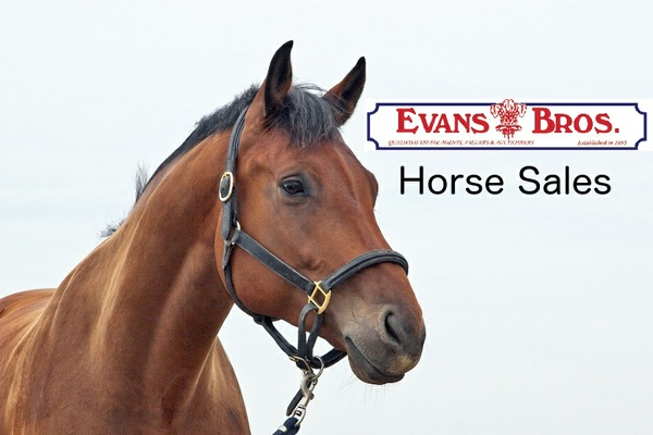 Evans Bros Horse Sale Catalogue For April 2016
