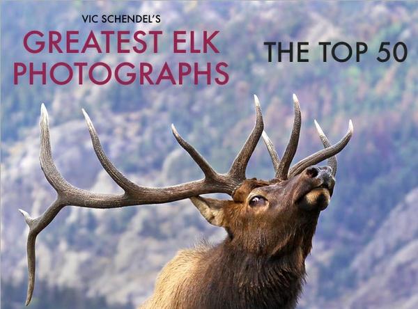 The TOP 50 Greatest Bull Elk Photographs