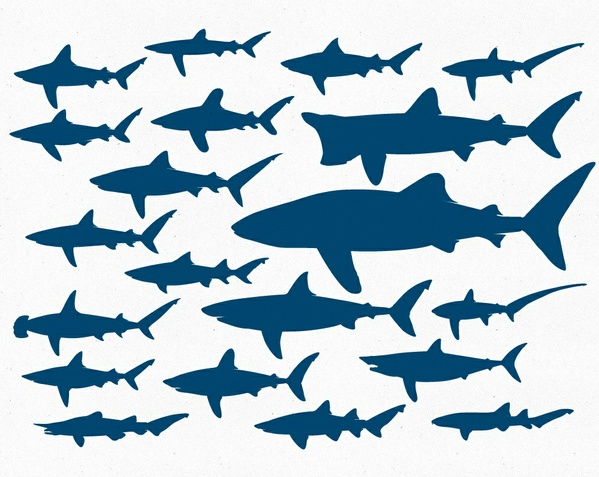 Sharks Vector Pack