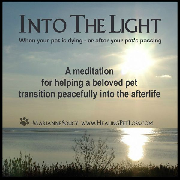 Into The Light - A Meditation for Helping a Beloved Pet Transition Peacefully into the Afterlife.