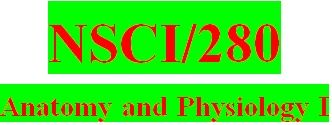 NSCI 280 Week 4 Ph.I.L.S. Activities