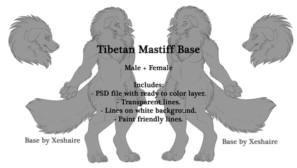 Tibetan Mastiff Base - Male + Female