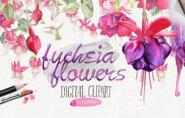Watercolor fuchsia flowers