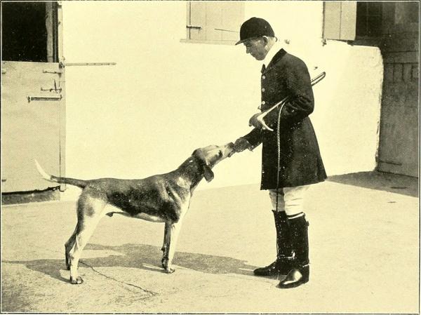 Audiolibro : Las aventuras de Sherlock Holmes 6 : La aventura del solterón aristócrata