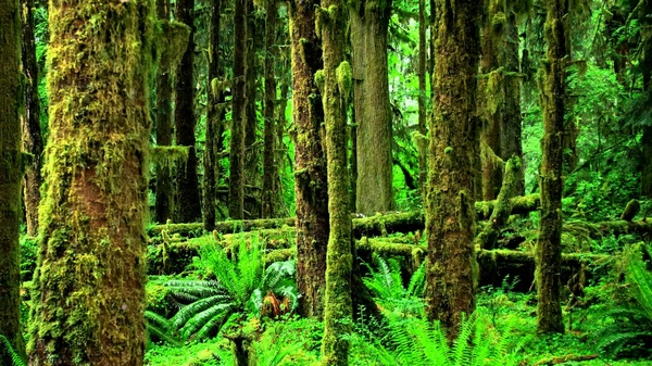 1 Hour of Rainforest Sounds .mp3