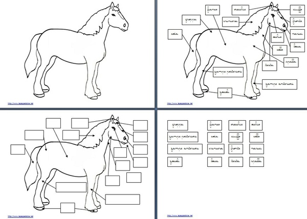 set per attività con l'incastro del cavallo Montessori