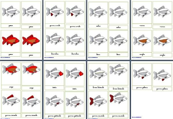 Nomenclature Montessori 3-6 anni PARTI DEL PESCE corsivo