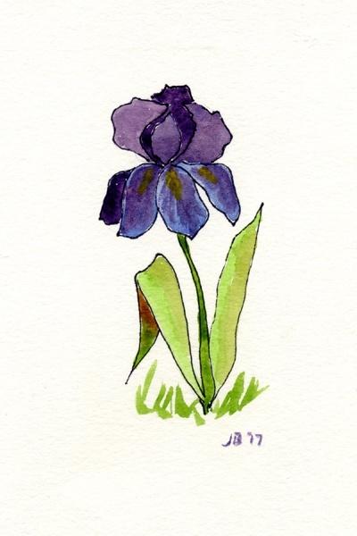 Notecard - Bearded Iris