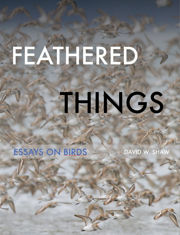 Feathered Things