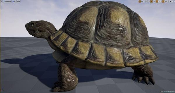 Realistic Turtle