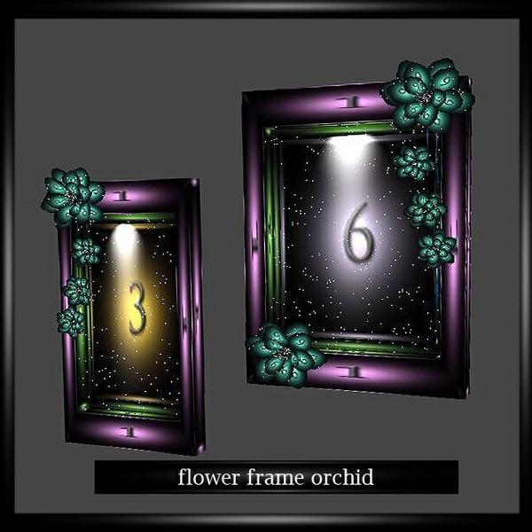 FLOWER FRAME ORCHID