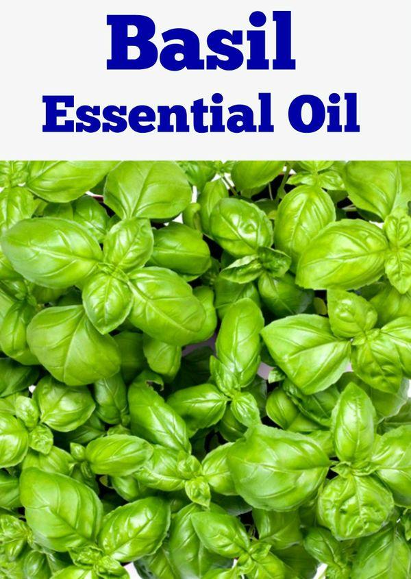 Basil Essential Oil