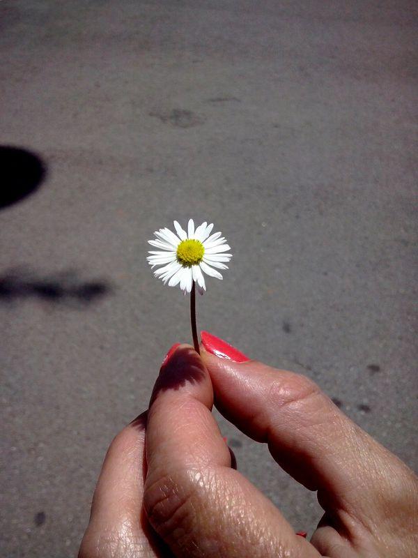 Plantas Flores Frutos La Margarita de Sandra Jorda