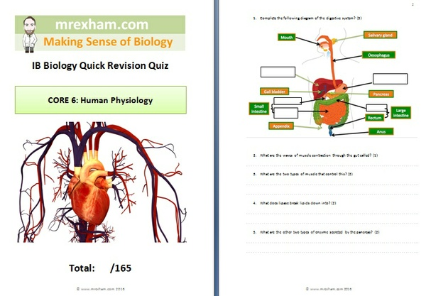 IB Biology Revision Quiz - Core 6: Human Physiology