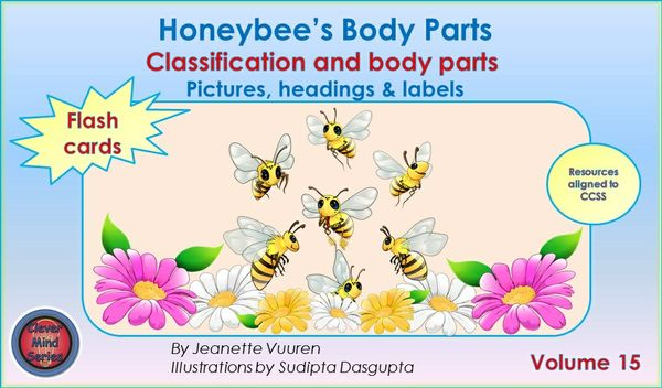 FLASH CARDS (PDF) HONEYBEE'S BODY PARTS VOLUME 15 - PICTURES, HEADINGS, LABELS