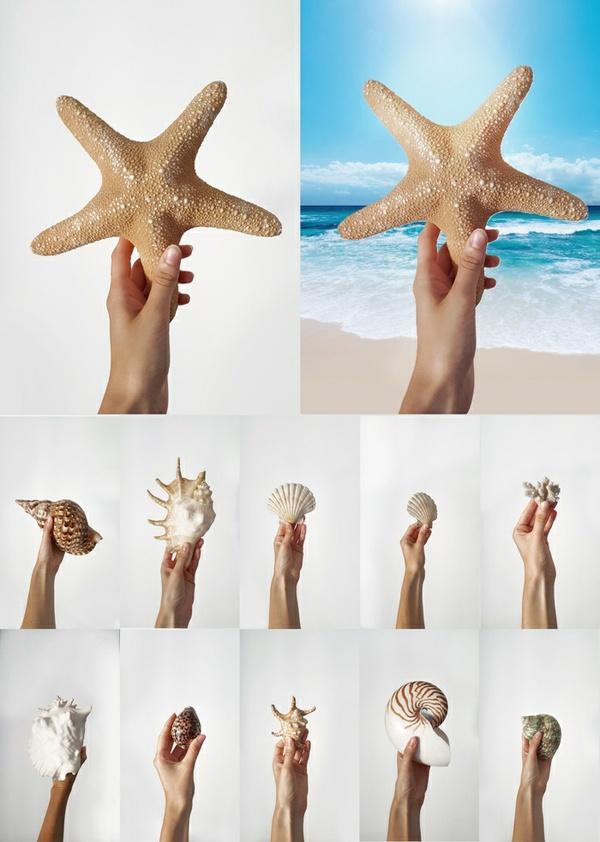 Hand holding shell, starfish, marine items