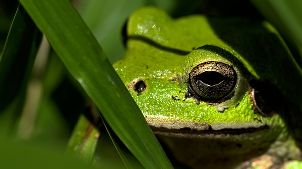 Frog Stock Photo Collection [Free Download]