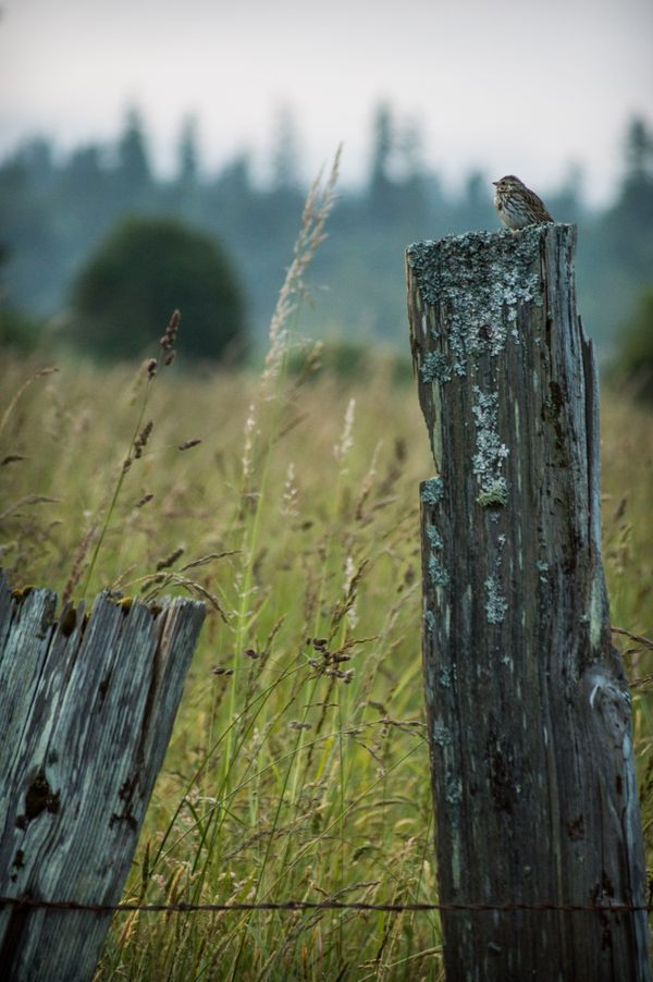 Bird on Rustic Post