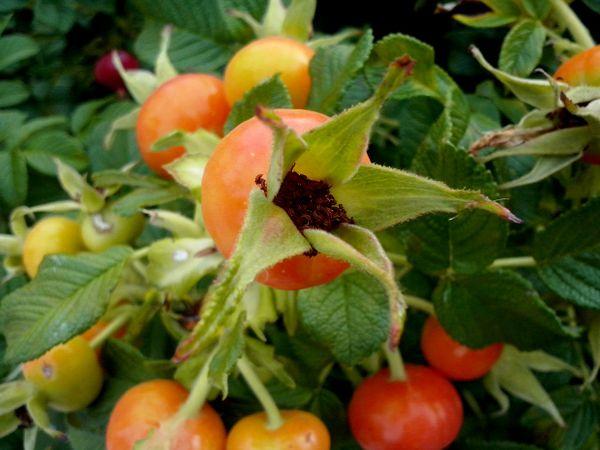 Naturaleza Plantas Flores Frutos
