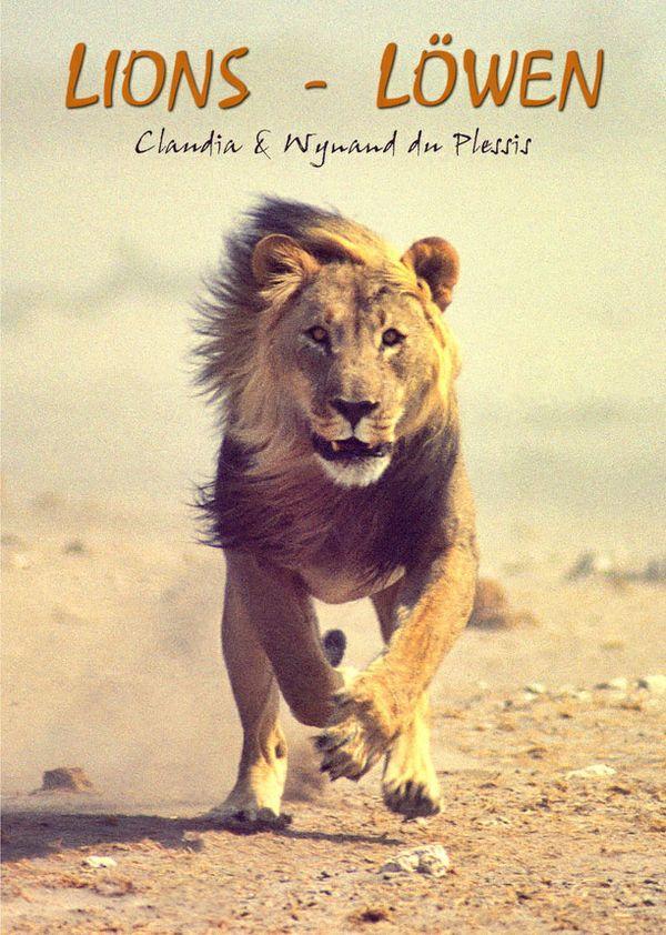 Lions / Löwen