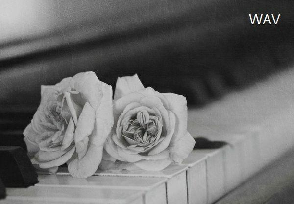 Sonata in D by W Paul Pulsipher