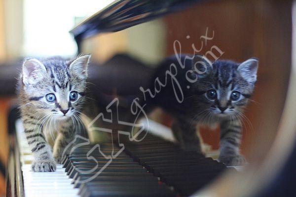 Kitty on Piano