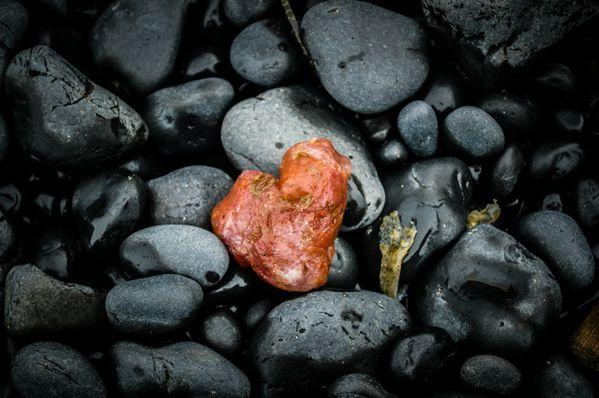Sea Sponge Heart