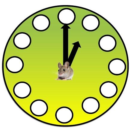 CLOCK FACE  - HICKORY DICKORY DOCK