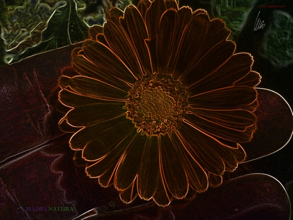 Flor en la flor de la vida con un retokito por lluis betancort