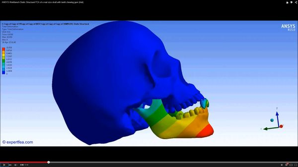 ANSYS Workbench MECHDAT file and 3D model for skull chewing gum