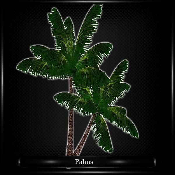 PALMS TREE