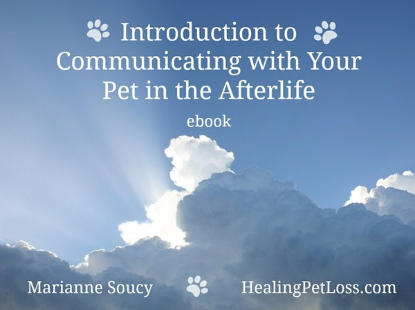 Introduction to Communicating with Your Pet in the Afterlife